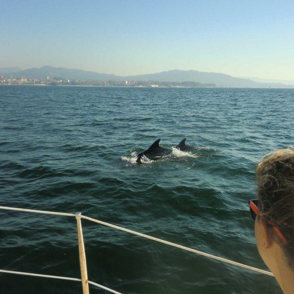 delfines_arroces_ria_de vigo_rodeiramar